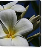 Pua Lena Pua Lei Aloha Tropical Plumeria Maui Hawaii Canvas Print