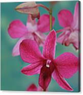 Puanani Kealoha Dendrobium D Burana Red Flame Hawaiian Orchid Canvas Print