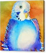 Pudgy Budgie Canvas Print