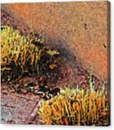 Pueblo Downtown Landscaping Canvas Print