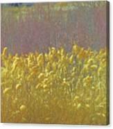 Pueblo Downtown--river Grasses Canvas Print