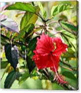 Puerto Rico State Flower Hibiscus Photograph By Charlene Cox