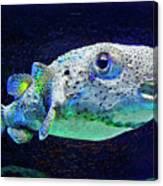 Puffer Fish Canvas Print