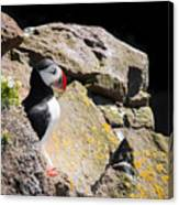 Puffin And Rocks Canvas Print