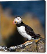 Puffin Canvas Print