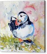 Puffin On Stone Canvas Print
