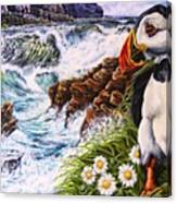 Puffin Peace Canvas Print