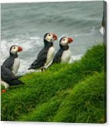 Puffins Returning From Fishing Canvas Print