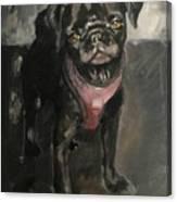 Pug Days Canvas Print