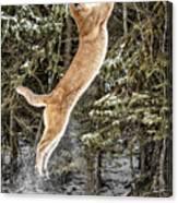 Puma High Jump Canvas Print