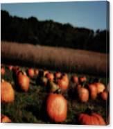 Pumpkin Field Shadows Canvas Print