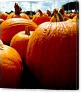Pumpkin Patch Piles Canvas Print
