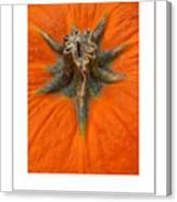 Pumpkin Stem Poster Canvas Print