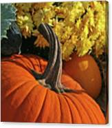 Pumpkin Still Life  Canvas Print