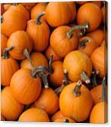 Pumpkins Canvas Print