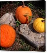 Pumpkins For October  Canvas Print