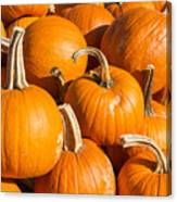 Pumpkins Pile 1 Canvas Print