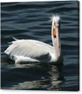 Punk Pelican Canvas Print