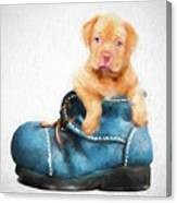 Pup In A Shoe Canvas Print
