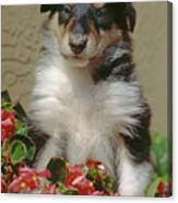 Pup In The Flowers Canvas Print