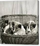 Puppies Of The Past Canvas Print