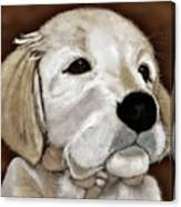 Puppy Canvas Print