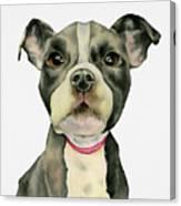 Puppy Eyes Canvas Print