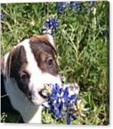 Puppy In The Blubonnets Canvas Print