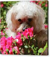 Puppy With Roses Canvas Print