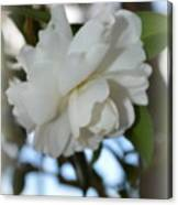 Pure Camelia Canvas Print