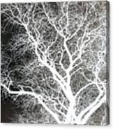 Pure Energy- Lightning Tree Canvas Print