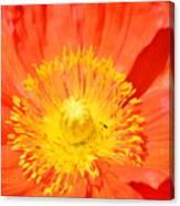 Pure Poppy Sunshine Canvas Print