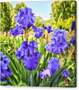 Pure Sapphire Iris Canvas Print