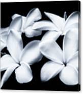 Pure White Large Canvas Art, Canvas Print, Large Art, Large Wall Decor, Home Decor, Photography Canvas Print