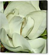 Pure White Fragrant Beauty Canvas Print