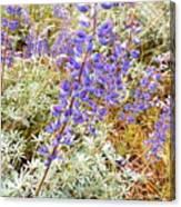 Pure Wild  Purple Canvas Print