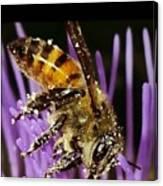 Purpel Nectar Canvas Print