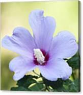 Purple Althea Canvas Print