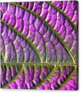 Purple And Green Leaf Canvas Print
