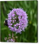 Purple And The Bee Canvas Print