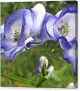 Purple And White Flowers Canvas Print