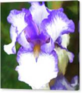 Purple And White Iris Canvas Print