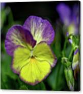 Purple And Yellow Bokeh Canvas Print