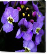 Purple Arctic Wild Flowers Canvas Print