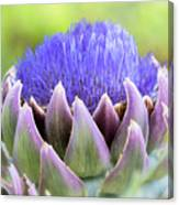 Purple Artichoke Flower  Canvas Print