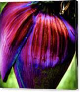 Purple Banana Pod Canvas Print