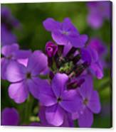 Purple Beauty Canvas Print