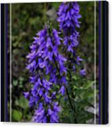 Purple Bell Flowers, Framed Canvas Print