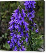 Purple Bell Flowers Canvas Print