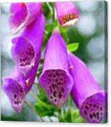 Purple Bells Canvas Print